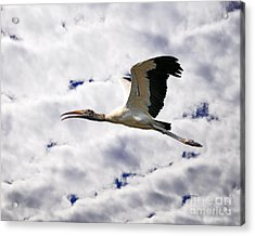 Sky Stork Acrylic Print