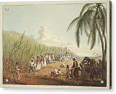 Slaves Cutting The Sugar Cane Acrylic Print by British Library