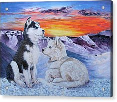 Sled Dog Dreams Acrylic Print by Karen  Peterson