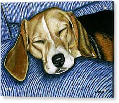 Sleeping Beagle Acrylic Print