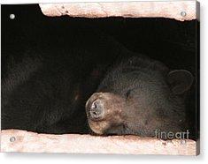 Sleeping Bear Acrylic Print by Nancy TeWinkel Lauren