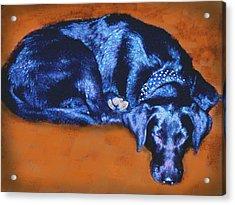 Sleeping Blue Dog Labrador Retriever Acrylic Print by Ann Powell