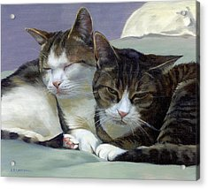 Sleeping Buddies Acrylic Print by Alecia Underhill