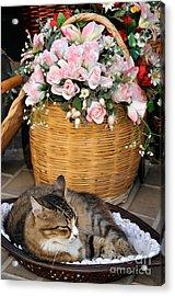 Sleeping Cat At Flower Shop Acrylic Print