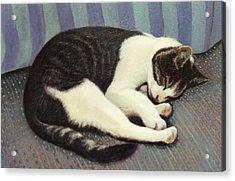 Sleeping Cat Acrylic Print by Blue Sky