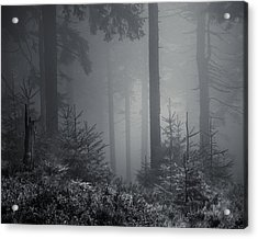 Sleeping Forest   Acrylic Print by Jaromir Hron