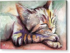 Sleeping Kitten Acrylic Print