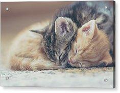 Sleeping Kittens Acrylic Print by Harpazo hope
