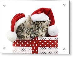 Sleeping Kittens In Presents Acrylic Print by Greg Cuddiford