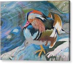 Sleeping Mandarin Duck Acrylic Print