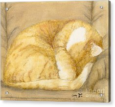 Sleeping Orange Tabby Cat Feline Animal Art Pets Acrylic Print by Cathy Peek