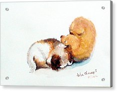 Sleeping Puppies Acrylic Print