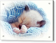 Acrylic Print featuring the photograph Sleeping Siamese Kitten by Tracie Kaska