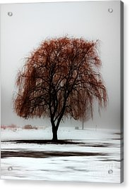 Sleeping Willow Acrylic Print