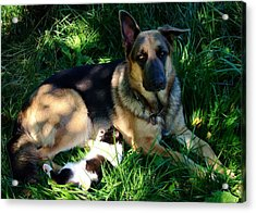 Sleepy Friends Acrylic Print by Alison Richardson-Douglas