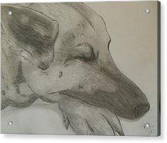 Sleepy Shepherd Acrylic Print