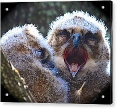 Sleepy Time Acrylic Print by AnnaJo Vahle