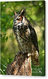 Sleepy Time In The Forest Great Horned Owl  Acrylic Print by Inspired Nature Photography Fine Art Photography