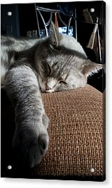 Sleepy Time Acrylic Print by Matt Radcliffe
