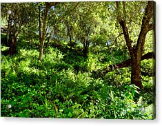Acrylic Print featuring the photograph Sleepy Valley Oaks by Gary Brandes