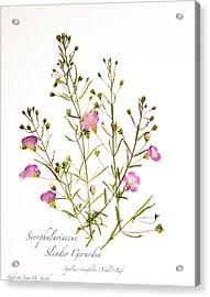 Slender Gerardia 3 Acrylic Print
