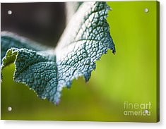 Slice Of Leaf Acrylic Print