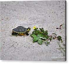 Slider And Sorrel In Sand Acrylic Print