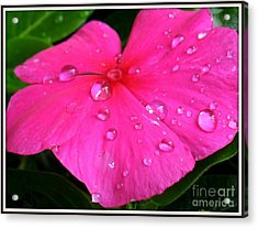 Acrylic Print featuring the photograph Sliders by Patti Whitten
