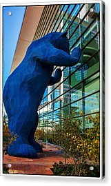 Slightly Blurry Denver Bear Acrylic Print by For Ninety One Days