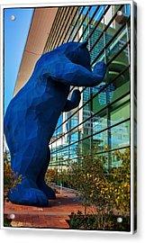 Slightly Blurry Denver Bear Acrylic Print by For Ninety One Days