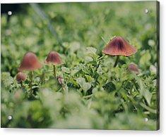 Slightly Magical Mushrooms Acrylic Print by Heather Applegate
