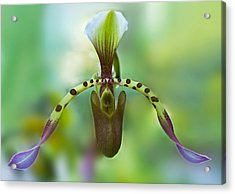 Slipper Orchid Of Selby Gardens Acrylic Print