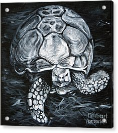 Slow And Steady Acrylic Print