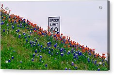 Slow Down And Smell The Bluebonnets Acrylic Print