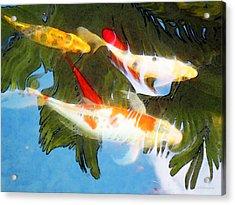 Slow Drift - Colorful Koi Fish Acrylic Print by Sharon Cummings