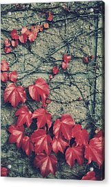 Slowly Dying Acrylic Print by Laurie Search
