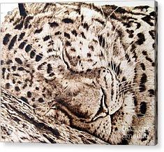 Slumber Acrylic Print by Paper Horses Jacquelynn Adamek