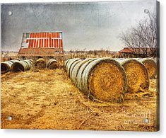 Slumbering In The Countryside Acrylic Print by Betty LaRue