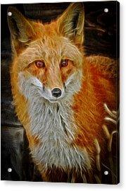 Sly Fox 2 Acrylic Print by Ernie Echols