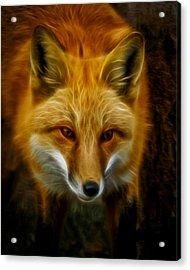 Sly Fox Acrylic Print by Ernie Echols