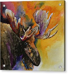 Sly Moose Acrylic Print by Beverley Harper Tinsley