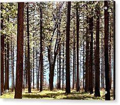 Sly Park Acrylic Print by Sherry Flaker