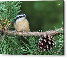 Small And Cute Acrylic Print