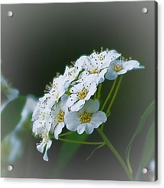 Small Beauty Acrylic Print