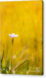 Small Flower In Moss - Greensboro North Carolina II Acrylic Print by Dan Carmichael