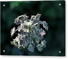 Acrylic Print featuring the photograph Small Flowers Makes One Big by Leif Sohlman