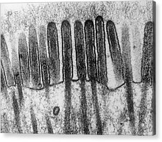 Small Intestine Lining Acrylic Print by Secchi-lecaque/roussel-uclaf/cnri