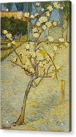Small Pear Tree In Blossom Acrylic Print by Vincent van Gogh