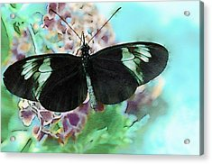 Small Postman Butterfly Acrylic Print