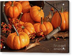 Small Pumpkins With Wood Bucket  Acrylic Print by Sandra Cunningham